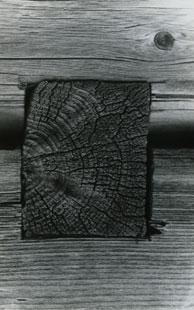 Ion Dumitriu - Galerie - Fotografii 12