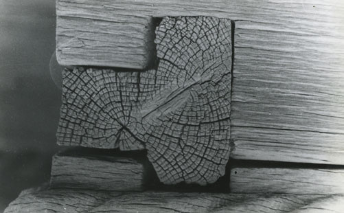 Ion Dumitriu - Galerie - Fotografii 14
